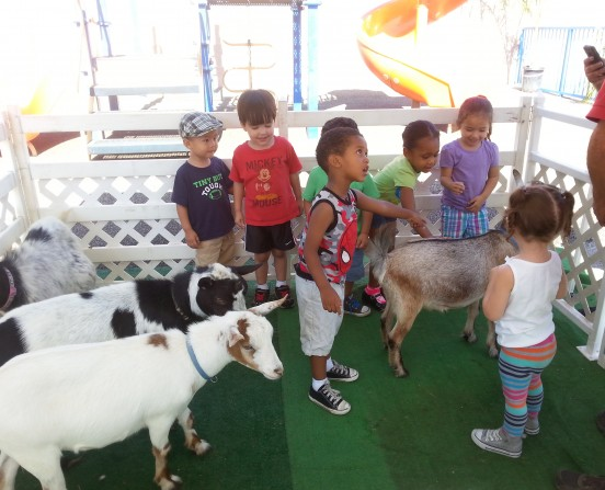 Petting Zoo at our preschool
