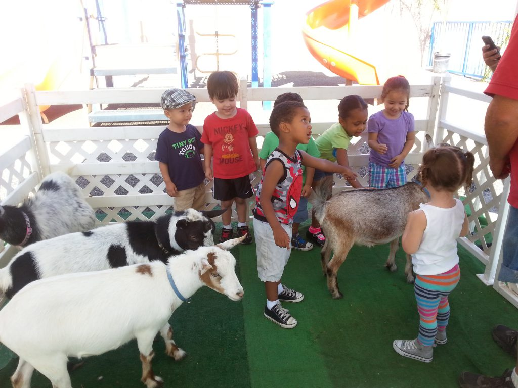 Petting Zoo at Preschool